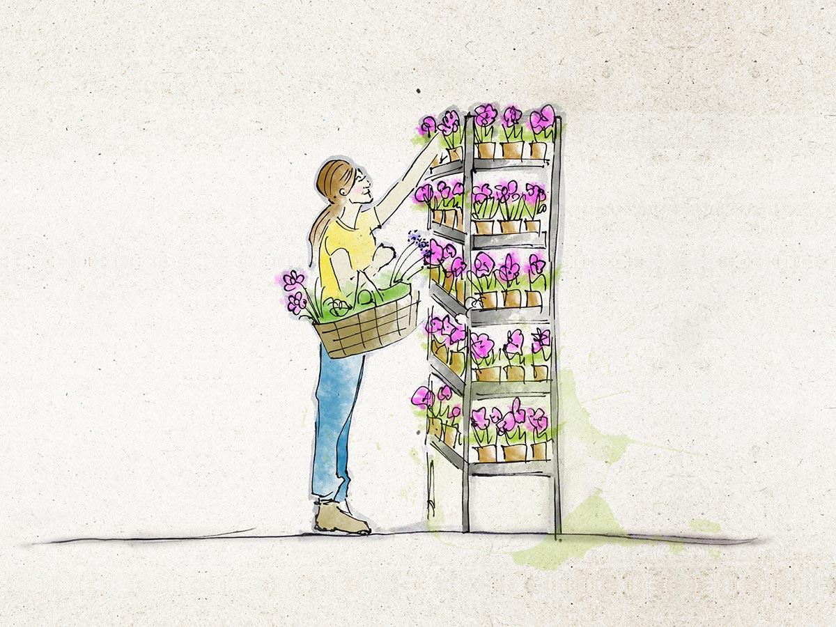 gartencenter selbach bellandris Auswahl Pflanzen Illustration